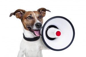 dog shouting into a white and red megaphone